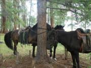 Equitation, balade autour du lac