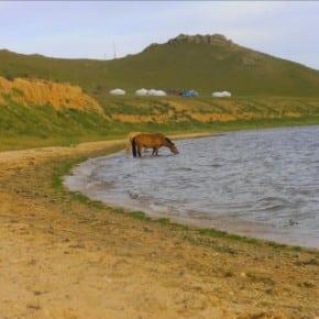 Chevaux Mongols au bord duLac
