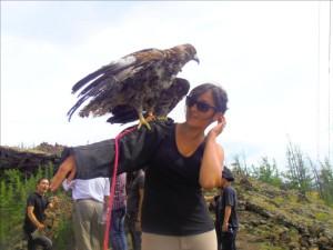 Aigle de Mongolie avec Elisa